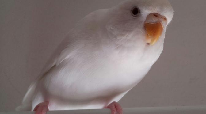 Work It Birdie!