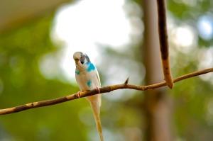 canary-bird-244781_1920