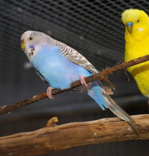 bird-738470_1920