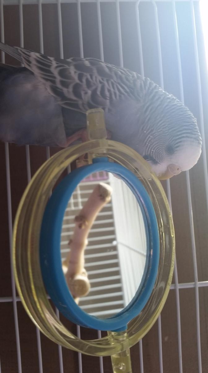 Meet Sunny