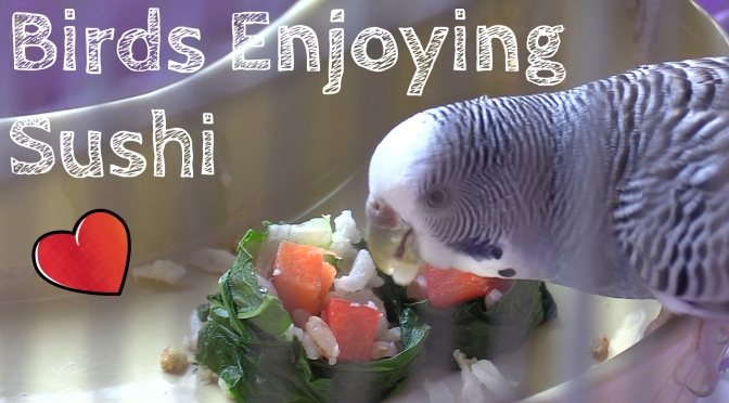 Our Birds Get Sushi