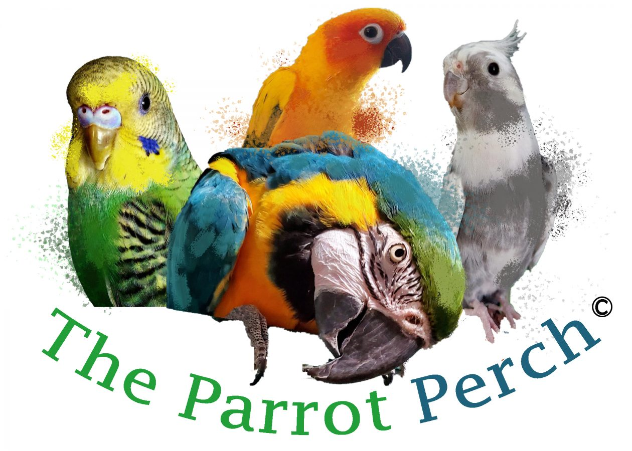 The Parrot Perch